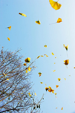 autumn leaves floating in a bright sky