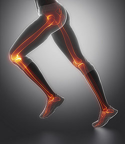 Hinge joints in human legs