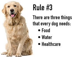 large dog sitting next to example text for rule 3