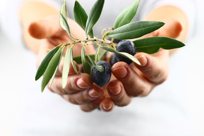 hands extending an olive branch