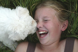 puppy licking girls face