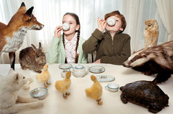 magical tea party with animals