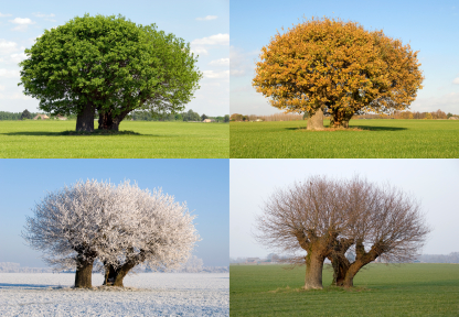 The four seasons of a tree