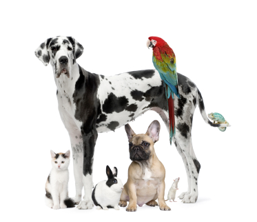 Group of pets against white background