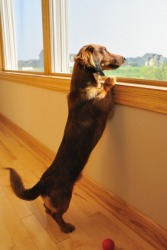 A dog will wag his tail when happy.