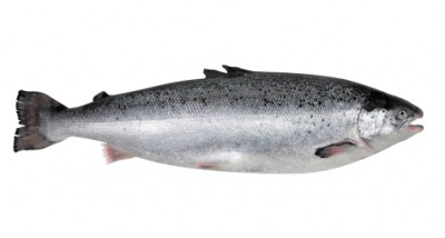 This salmon is a fish.