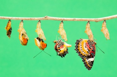The life cycle of a butterfly.