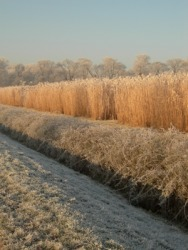 A frost covered berm by a field.