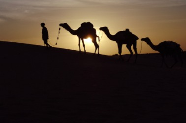 A nomad leads his camel at sunset.