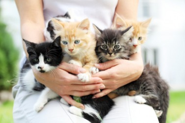 A woman holds a selection of kittens.