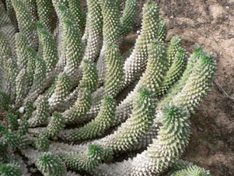 This cactus is an example of a xerophyte.