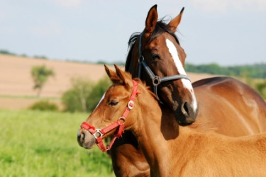 A horse with her colt.