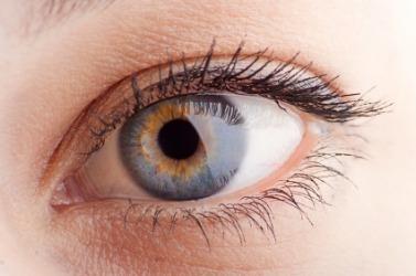 The human eye.