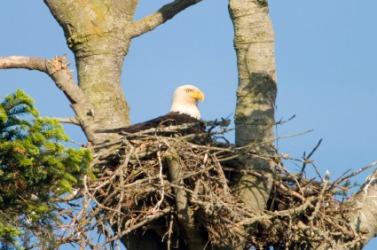 An eagle's eyrie.