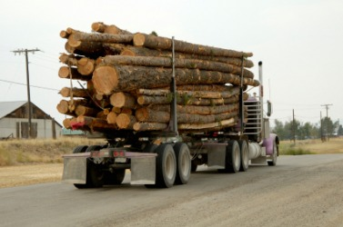 The freight being cared by this truck is logs.
