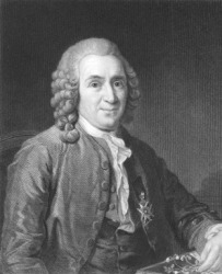 A portrait of Carl Linnaeus.
