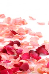 Pink and red rose petals.