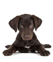 A puppy is a whelp.
