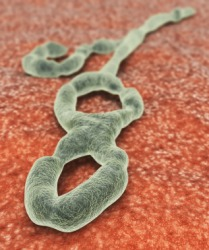 A depiction of the ebola virus.