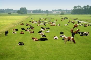 Livestock in a field.