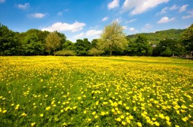 A meadow full of flowers.