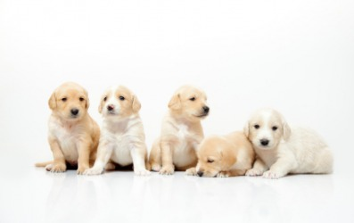 Each of these puppies is a quin.