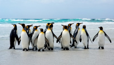 These penguins are Antarctic animals.