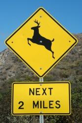Beware of deer crossing this road.