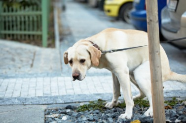 Dog poop is excrement.