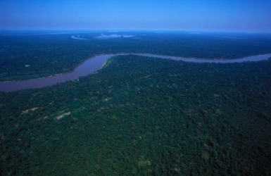 An aerial view of the Amazon river and surrounding rainforest.
