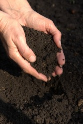 A handful of loam.