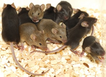 Several little mice.