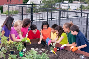 Young urban farmers tend a rooftop garden.