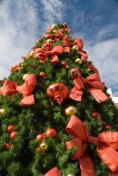 A beribboned Christmas tree.
