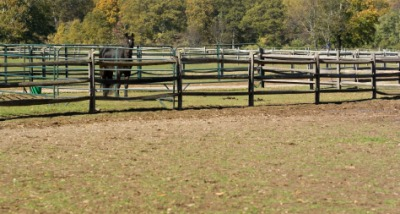 A horse in a corral.