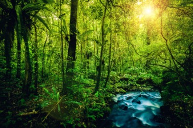The lush vegetation of a rainforest.