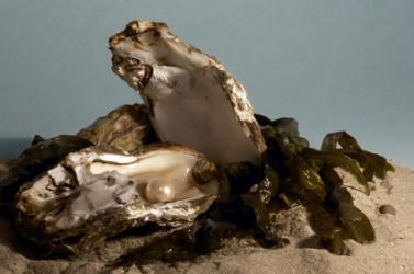 A pearl inside an oyster.