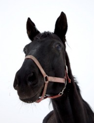 A black horse.