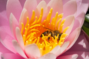 Pollination is an example of mutualism.