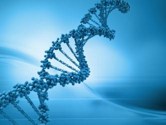 A DNA model.
