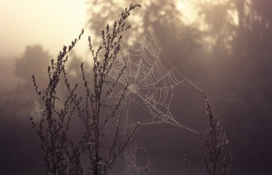A tenuous spider web.