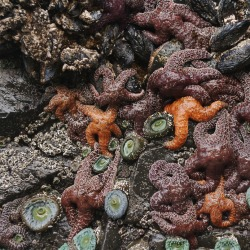 These creatures at the bottom of a tide pool are an example of benthos.