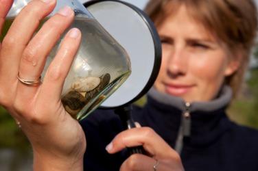 A biologist studies living organisms.