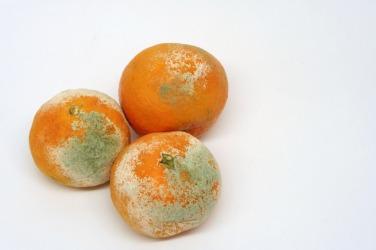 Three rotten oranges.