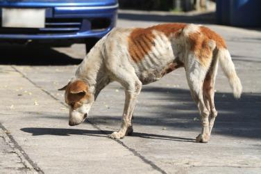 A poor scrawny dog.