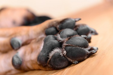 The underside of a dogs foot is called a pad.