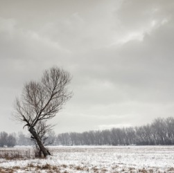 A bleak winter landscape.
