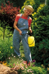 The woman is spraying pesticide to control the insects in her garden.