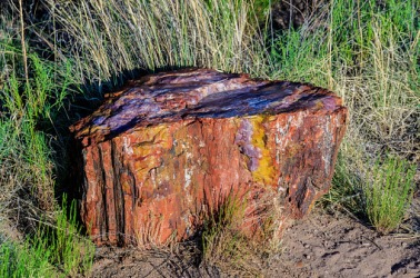 Petrified wood in Arizona's Petrified Forest.