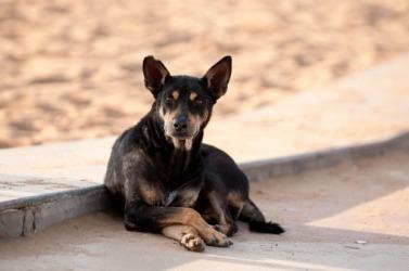 A pitiful stray dog
